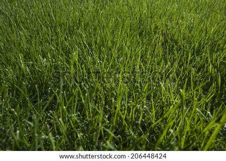 Grass close-up #206448424