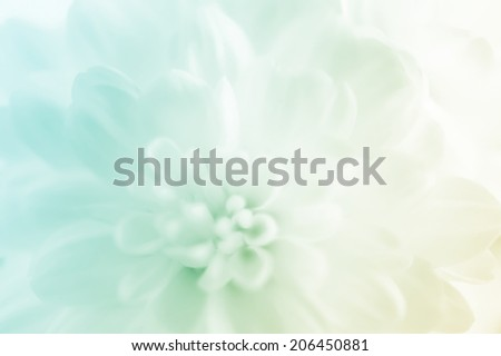 white Chrysanthemums on mulberry paper texture       #206450881