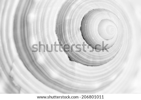 Sea shell spiral #206801011