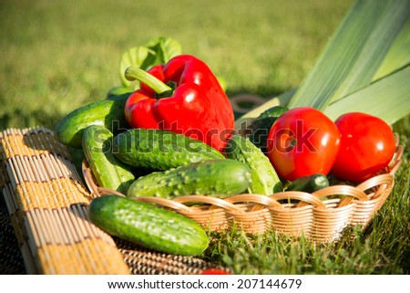 Succulent vegetables in the sunny summer evening #207144679