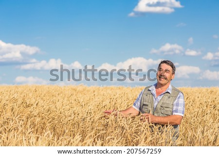 farmer standing in a wheat field, looking at the crop #207567259