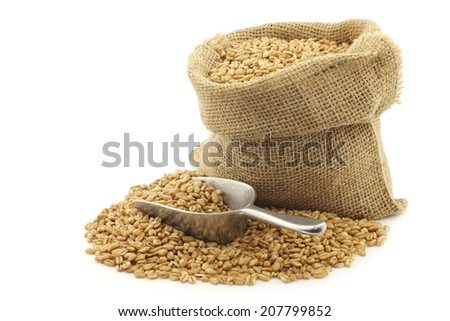 farro grain in a burlap bag with an aluminum scoop on a white background #207799852