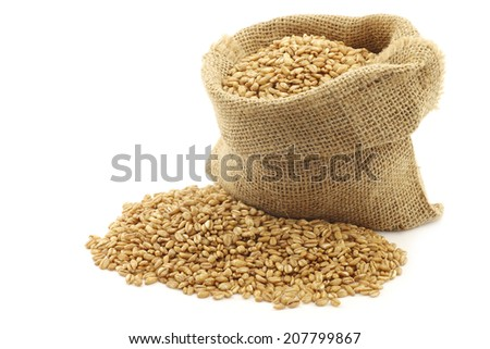 farro grain in a burlap bag with an aluminum scoop on a white background #207799867