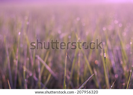 Abstract background bokeh soft purple circle caused intentionally photography the grass and water drops out of focus #207956320