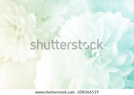 vivid color Chrysanthemums in soft style #208366519