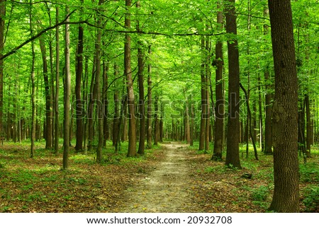 forest #20932708