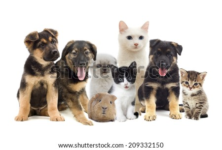 cat and dog #209332150