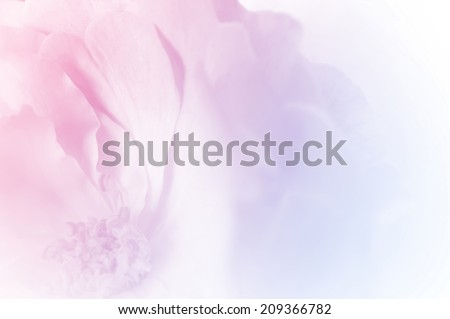 sweet color rose petals in soft color style for background #209366782