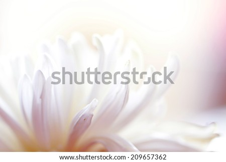 a macro photo of white flower,multicolor #209657362