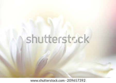 a macro photo of white flower,multicolor #209657392