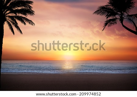 Scenic view of palm trees and beach at sunset #209974852