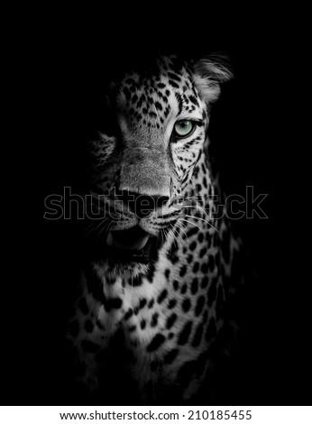 Leopard portrait #210185455