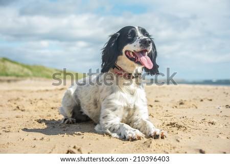 Dog  #210396403
