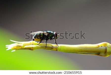 beauty bug insect on green leaf #210655915
