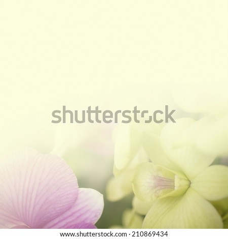 sweet color orchids in soft style for background   #210869434