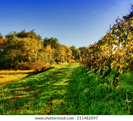 Autumnal background of Tuscany Campaign. #211482097