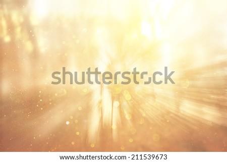zoom lens and golden light burst among trees