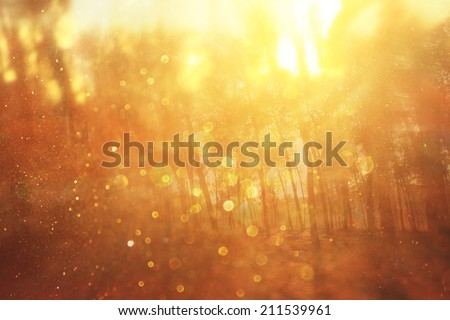 abstract photo of light burst among trees and glitter bokeh. image is blurred #211539961