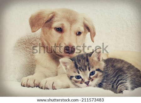 kitten and puppy  #211573483