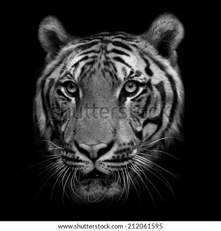 tiger #212061595