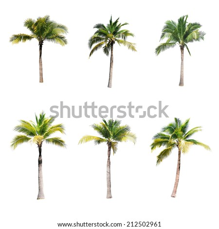 coconut trees on white background  Royalty-Free Stock Photo #212502961