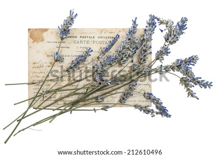 dried lavender flowers and old post card isolated on white background