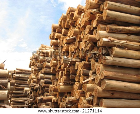 Stack of tree trunks of Eucalyptus that will be use in paper manufacture #21271114