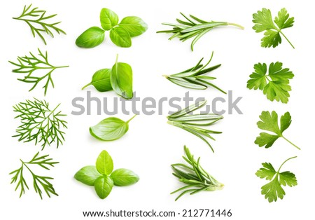 Parsley herb, basil leaves, dill, rosemary spice isolated on white background. #212771446