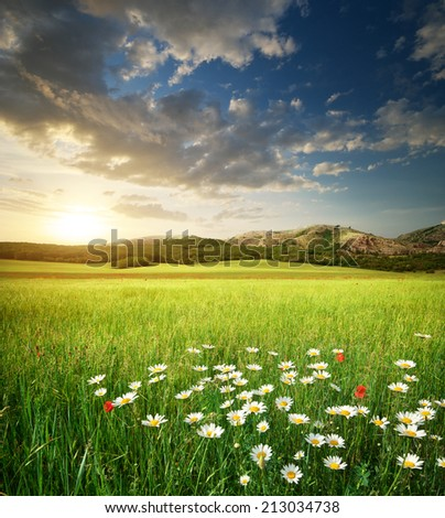 Beautiful meadow landscape. Composition of nature. #213034738
