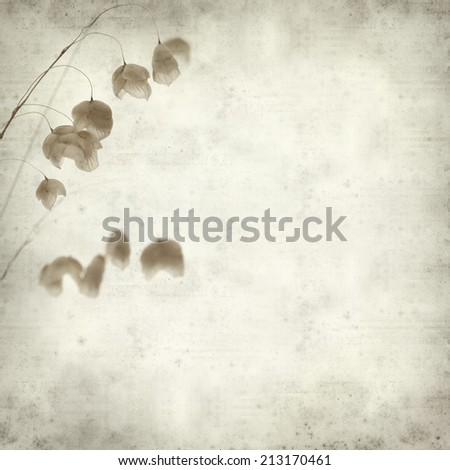 textured old paper background with Biza, quacking grass #213170461
