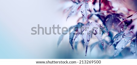 Colorful autumn leaves with drops and copy space