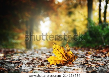 Autumn forest landscape with yellow leaves