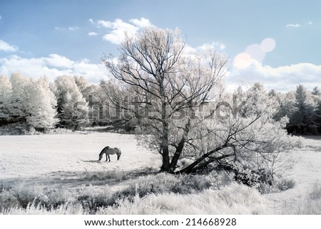 An infrared photo of a horse in a field with a stream on the edge of a forest.  Photographed with a 665nm Infrared camera.
