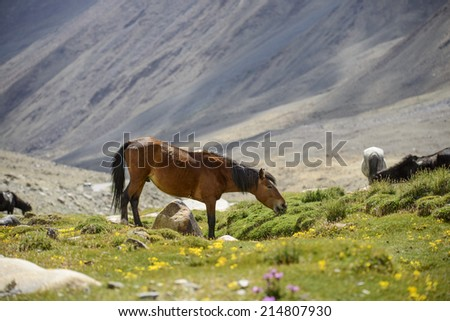 horses in field and mountain #214807930