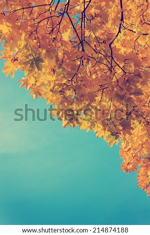 Autumn leaves  sky background/ Autumn Trees Leaves in vintage color #214874188