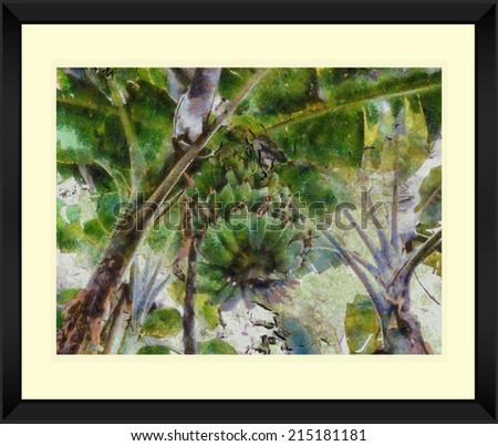 Original watercolor painting of banana tree with black frame,art illustration #215181181