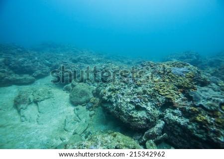under the sea #215342962