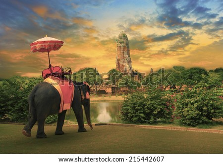 elephant dressing with thai kingdom tradition accessories standing in front of old pagoda in Ayuthaya world heritage site use for tourism and multipurpose background , backdrop