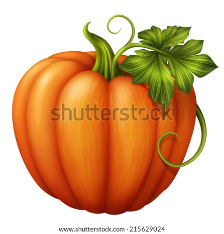 autumn orange pumpkin with green leaf, illustration isolated on white background