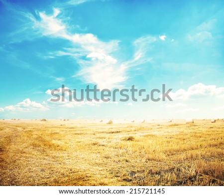 View of autumn field with hays  #215721145