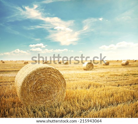 hay-roll on meadow against sunset background  #215943064