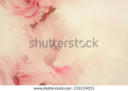 Macro shot of Gladiolus flowers.