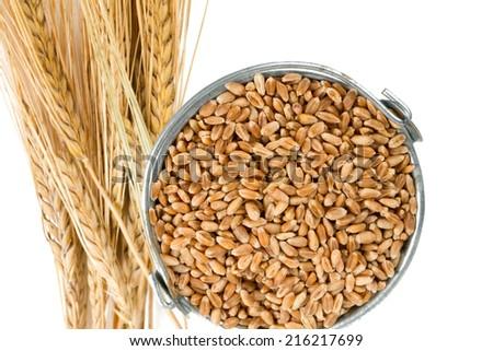 pearl barley in a bucket  #216217699