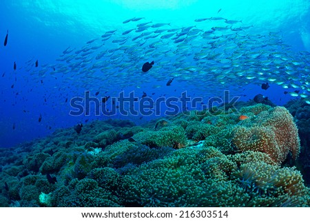 Beautiful Coral in Koh Tao, Thailand #216303514