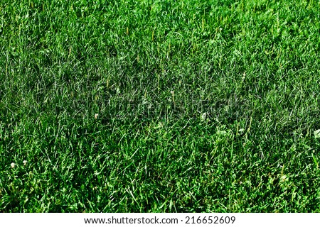 Green grass with water drops, close-up. Natural background #216652609