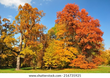 Collection of beautiful colorful autumn trees with leaves in yellow, orange and red #216735925