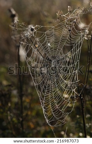 web in the nature #216987073
