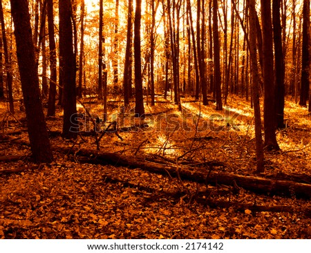 Warm tone woods in the fall with fallen autumn leaves on the ground #2174142