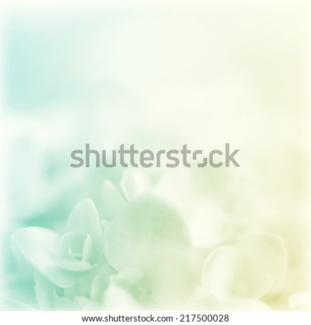 sweet color hydrangeas in soft color for background #217500028