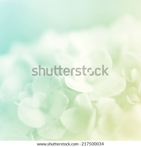 sweet color hydrangeas in soft color for background #217500034
